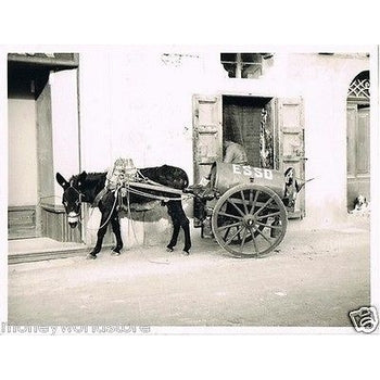 REAL PHOTO VINTAGE 1950's *THE ESSO DONKEY,GOZO*ITALY,RODGER LEE,ESSO OIL,RARE-moneyworld-store