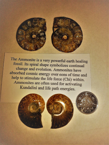 AMMONITE-pairs - Very Shari