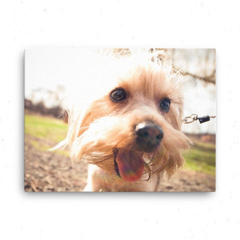 Canvas (with wooden frame) - Wear Your Pup!
