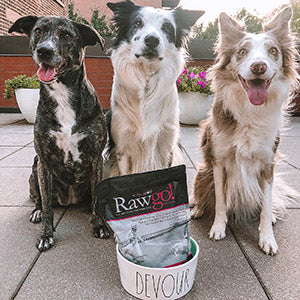 Three Dogs with a bag of Rawgo in a bowl
