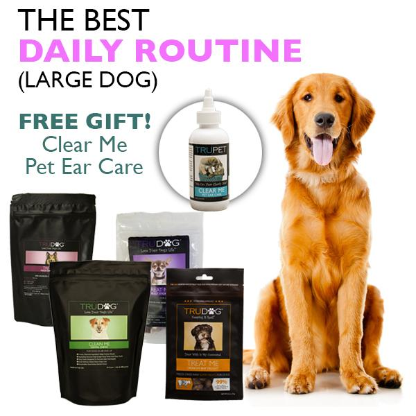 The Best Daily Routine (Large Dog)