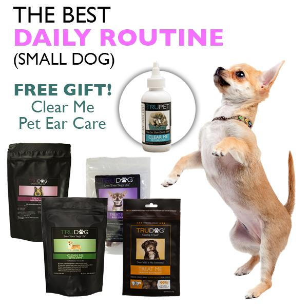 The Best Daily Routine (Small Dog)