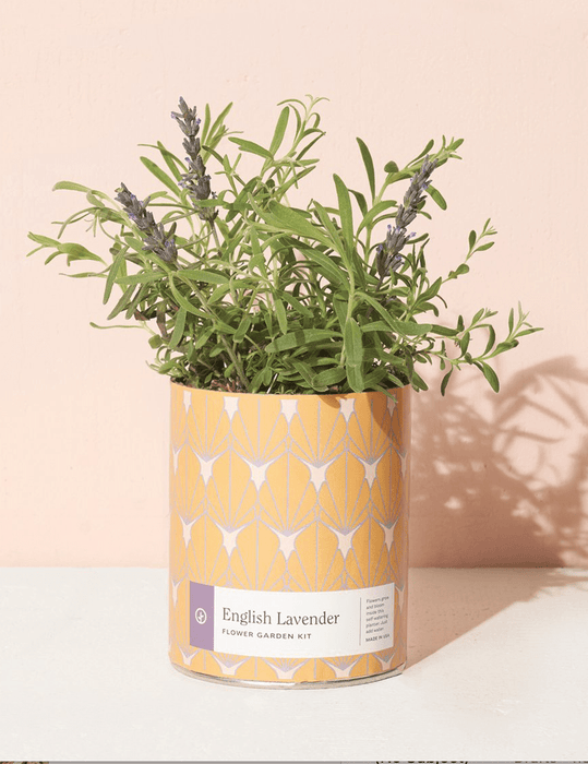 English Lavender Waxed Planter