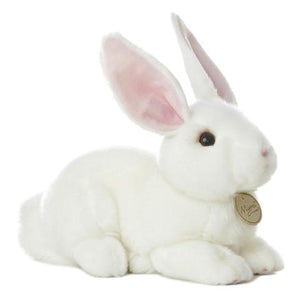 American White Rabbit