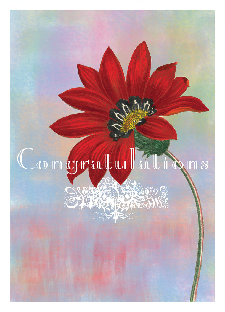 Congratulations Red Daisy Card