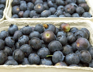 BLUEBERRY JAM MAINE WILD