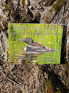 Maine Author JUNE THE LOON by Roger L. Stevens