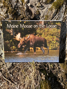 Maine Author MAINE MOOSE ON THE LOOSE by Robert L. Stevens, Jr.