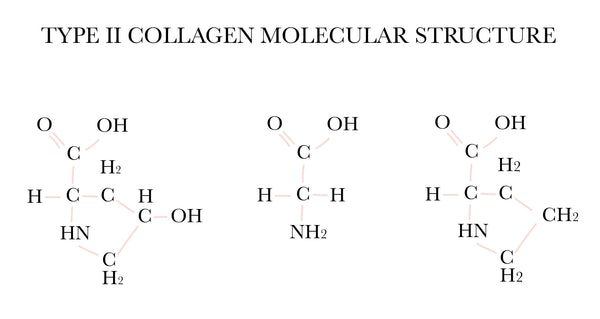What is Type II Collagen?