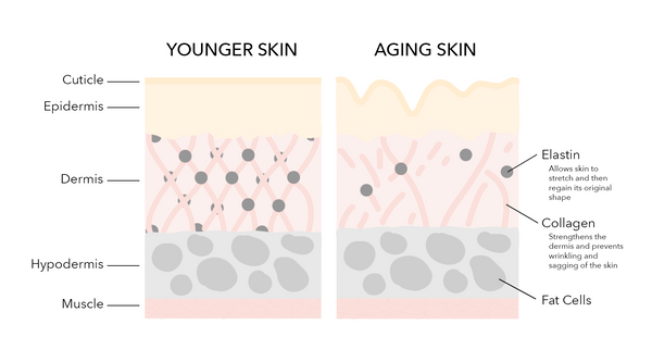Collagen and Elastin: How Do They Work Together and What Are Their Benefits?