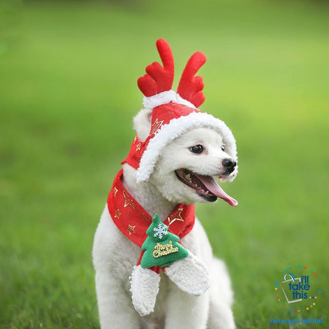 Image of Pet Lovers our Dog/Cat Santa/Birthday Cap, Scarf, Antler and Christmas Hat Costume, S-XXL - I'LL TAKE THIS