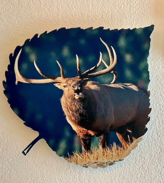 Bull Elk On Aspen Leaf