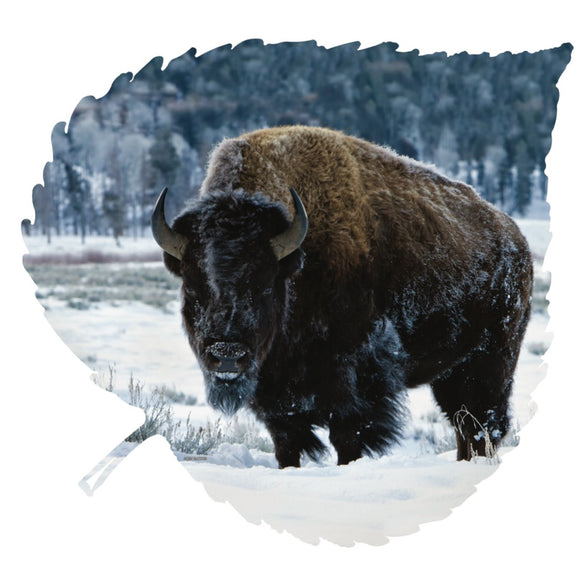 Winter Bison On Aspen Leaf