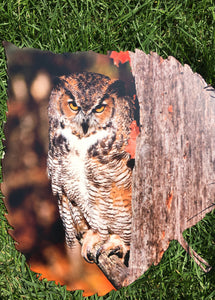 Owl On Aspen Leaf