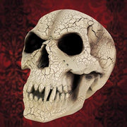 Vampire Skull - Costumes and Collectibles