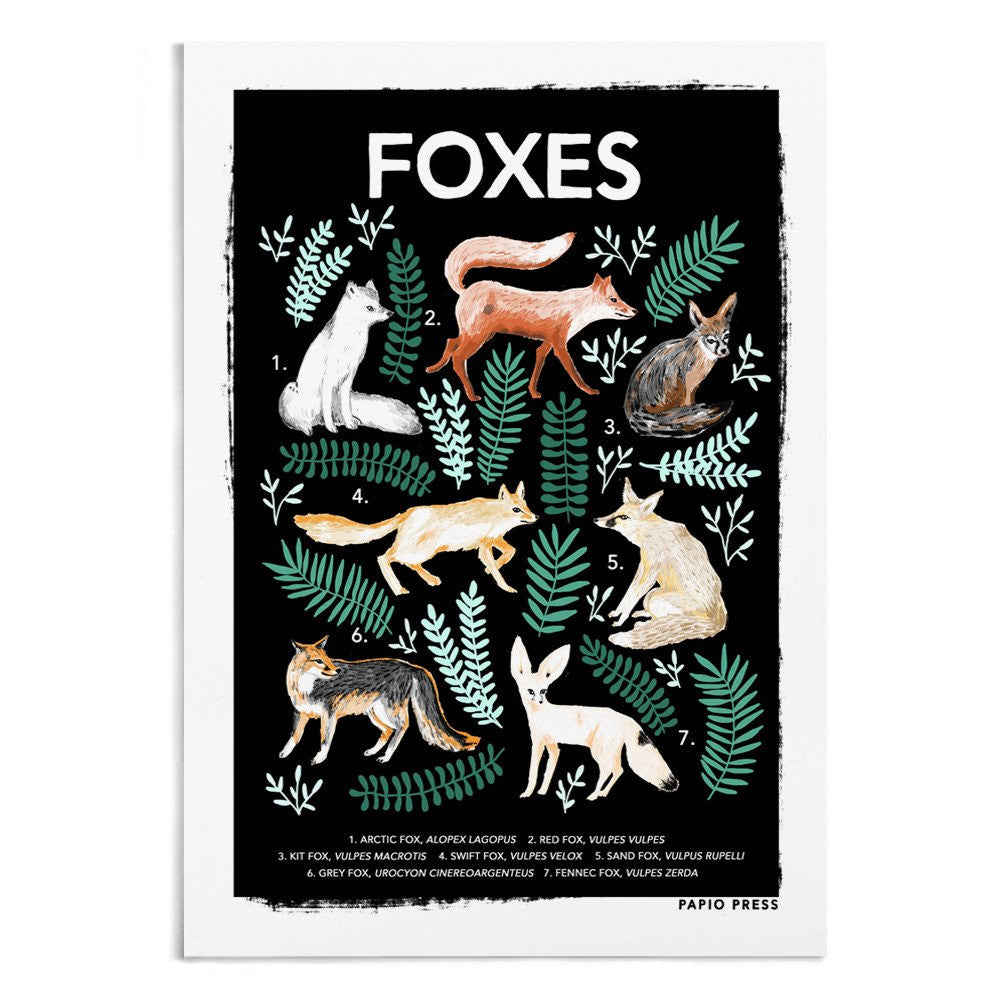 FOX NATURAL HISTORY PRINT - A4 ARTISTS PRINT - PAPIO PRESS