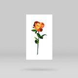 Orange Rose Temporary Tattoo by Zihee (Set of 3)