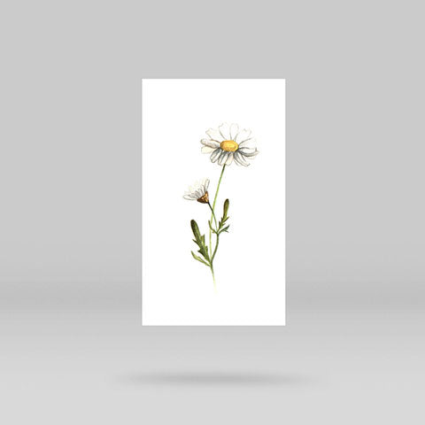 Daisy Temporary Tattoo By Lena Fedchenko (Set of 3)