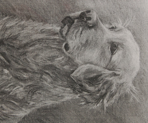 charcoal drawing of a golden retriever