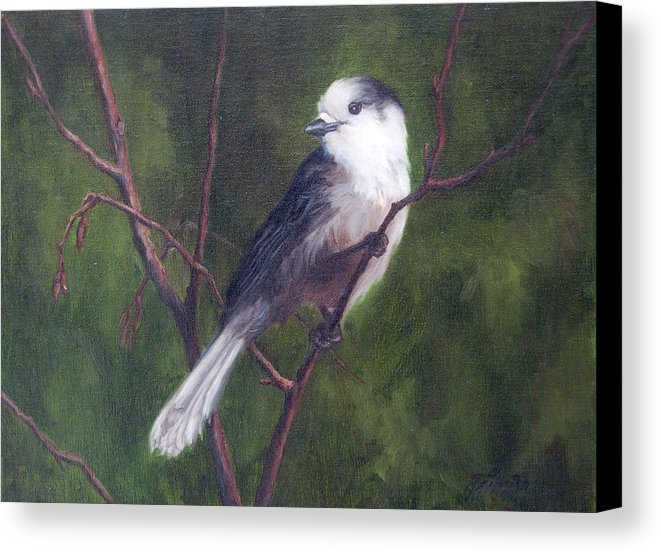 Whiskeyjack - Canvas Print of an Original Gray Jay Painting
