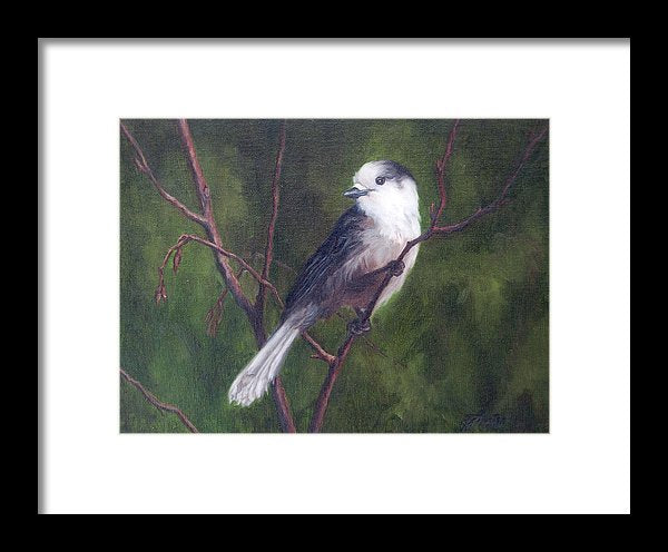 Whiskeyjack - Framed Print from an Original Gray Jay Painting