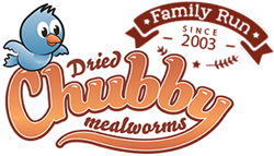 Chubby Mealworms Canada