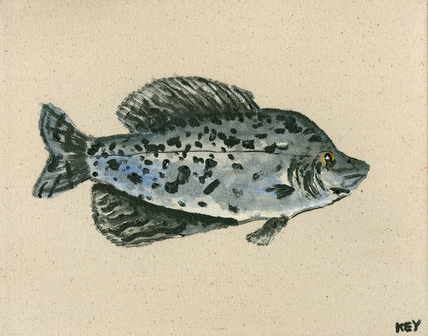 "Original ""South Aquatic"" Painting - Crappie"