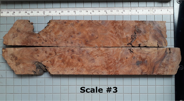 THUJA KNIFE SCALES