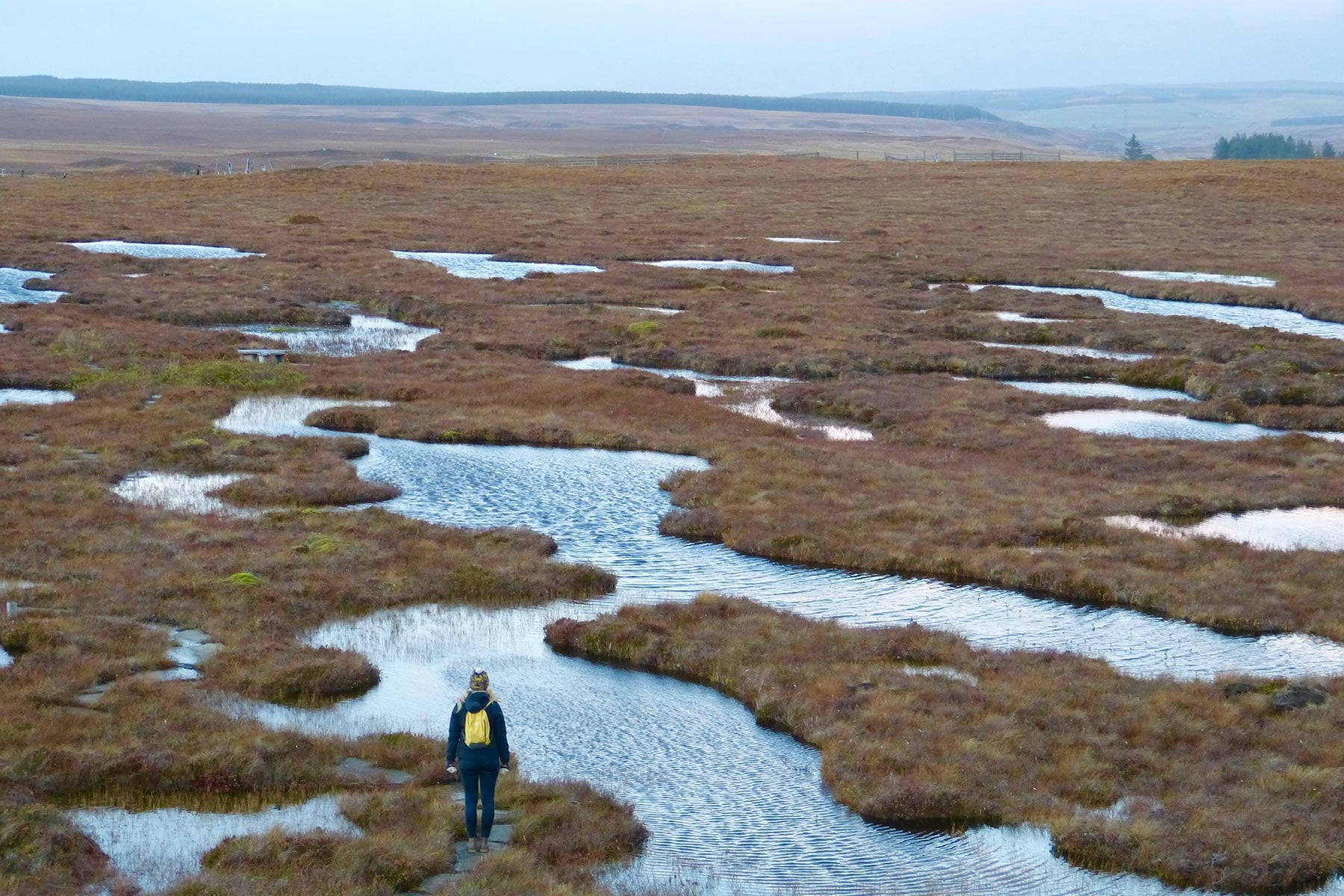 Blanket Peat Bog, Forsinard, Flow Country