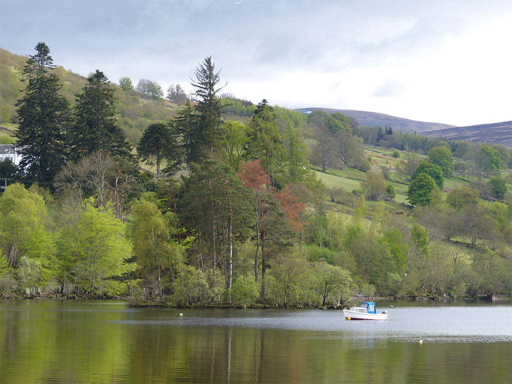 Loch Tay, Trees & Boat from Kenmore