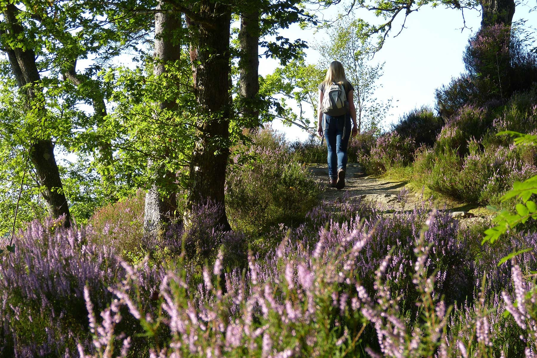 Heather and Forest Path, Loch Ard, Trossachs