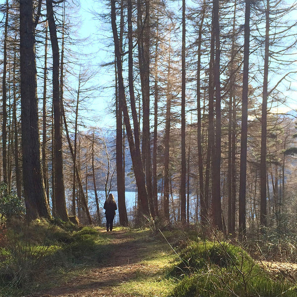 Wandering through the mountain pines, Loch Lomond