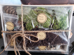 DIY Kit for Moss Terrarium - Daydreams Studio