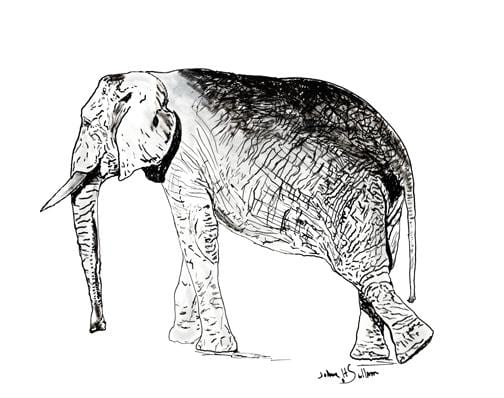Elephant Walking Pen and Ink Drawing - Daydreams Studio