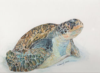 Green Sea Turtle Study - Daydreams Studio