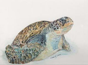 Green Sea Turtle Giclee Print - Daydreams Studio