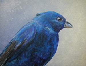 Indigo Bunting study - Daydreams Studio