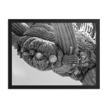 Cactus lines Framed poster - Daydreams Studio
