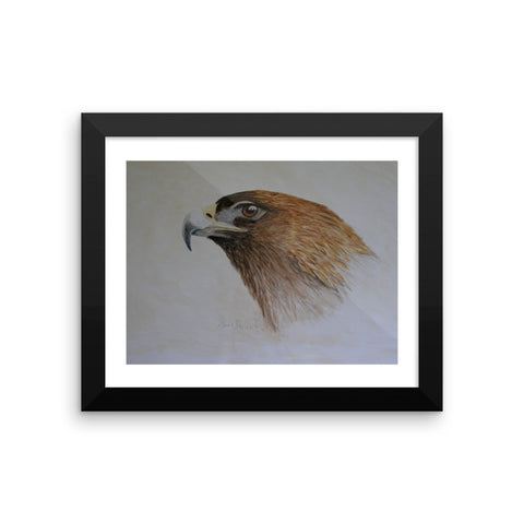 Golden Eagle Study Framed photo paper poster