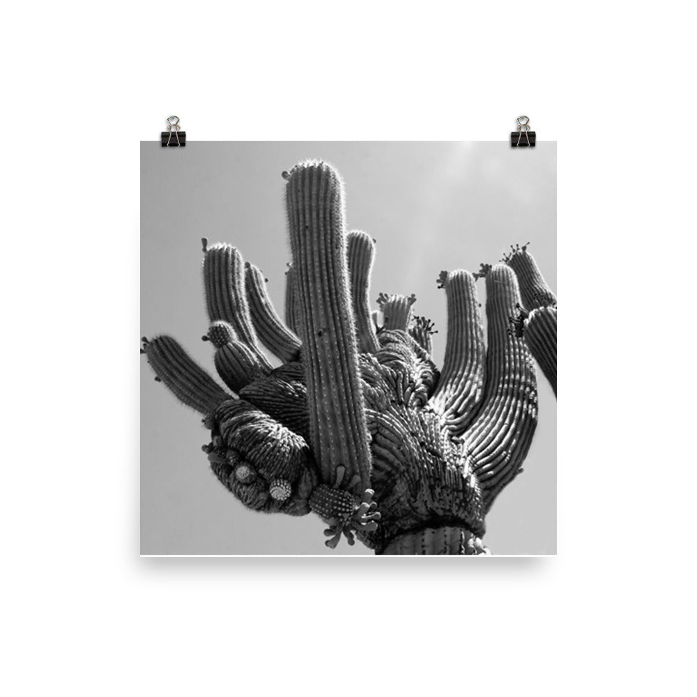 The hand of cactus Poster - Daydreams Studio