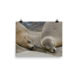Sweet Dreams Seals Photo paper poster - Daydreams Studio