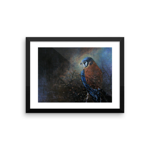 Kestrel framed photo paper poster