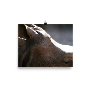 More to me  Rhino Poster - Daydreams Studio