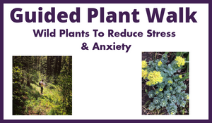 Guided Plant Walk - Wild Plants To Reduce Stress and Anxiety -Aug 11