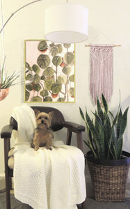 How to Add Plants to Your Space When You Don't Have a Green Thumb.