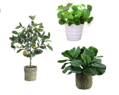 faux plants from Amazon