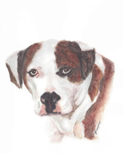 Gracie | pet portrait in watercolor | Beverly Gurganus Fine Art