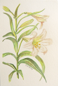 Finding Hope | free botanical art | Beverly Gurganus Fine Art
