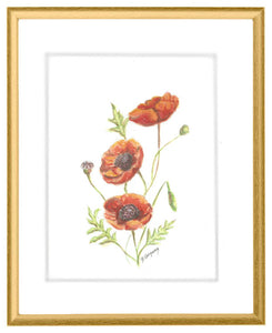 Augusts Poppy | Birth flower print | Beverly Gurganus Fine Art