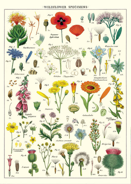 Vintage Poster Wild Flowers